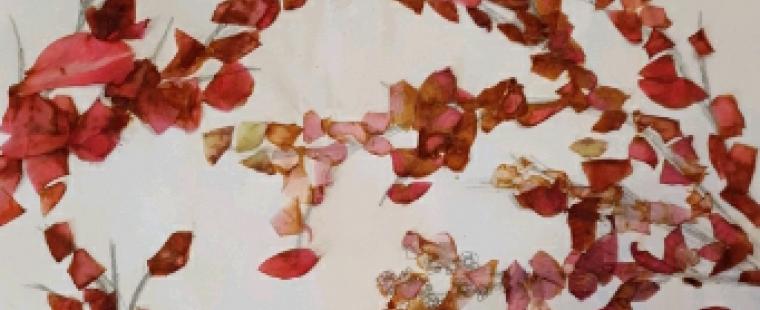 izzah-blossom